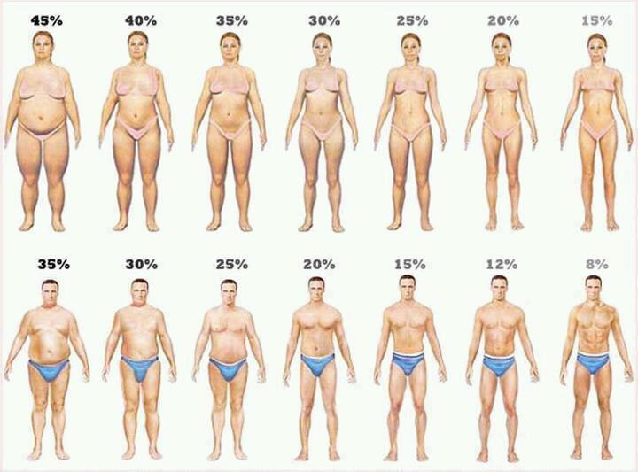 body fat understanding body fat percentage and bmi by erin weiss