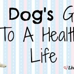 A Dog's Guide To A Healthy Life