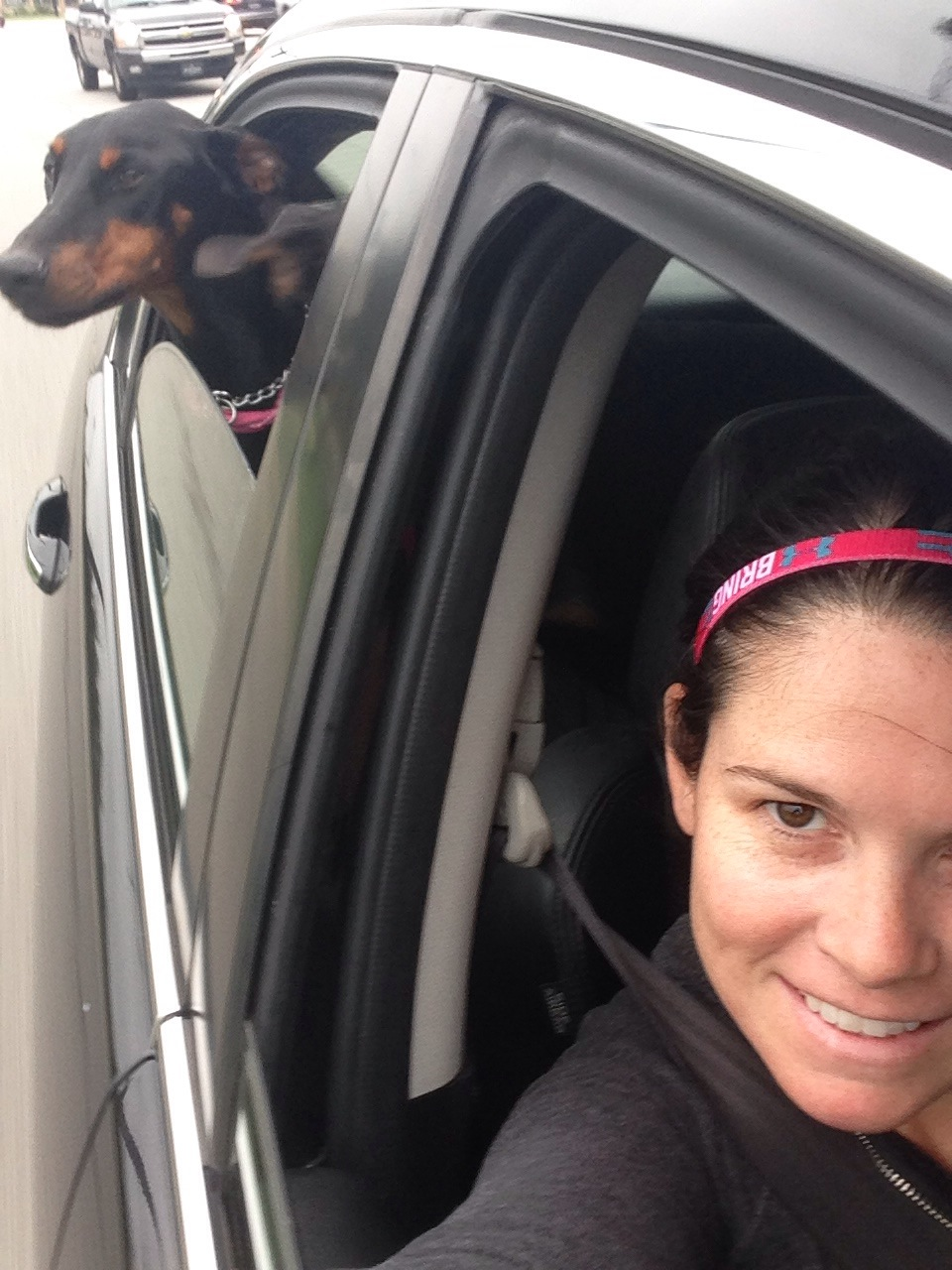 Dobermans in car