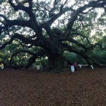 Angel Oak Tree and Friends in Town!